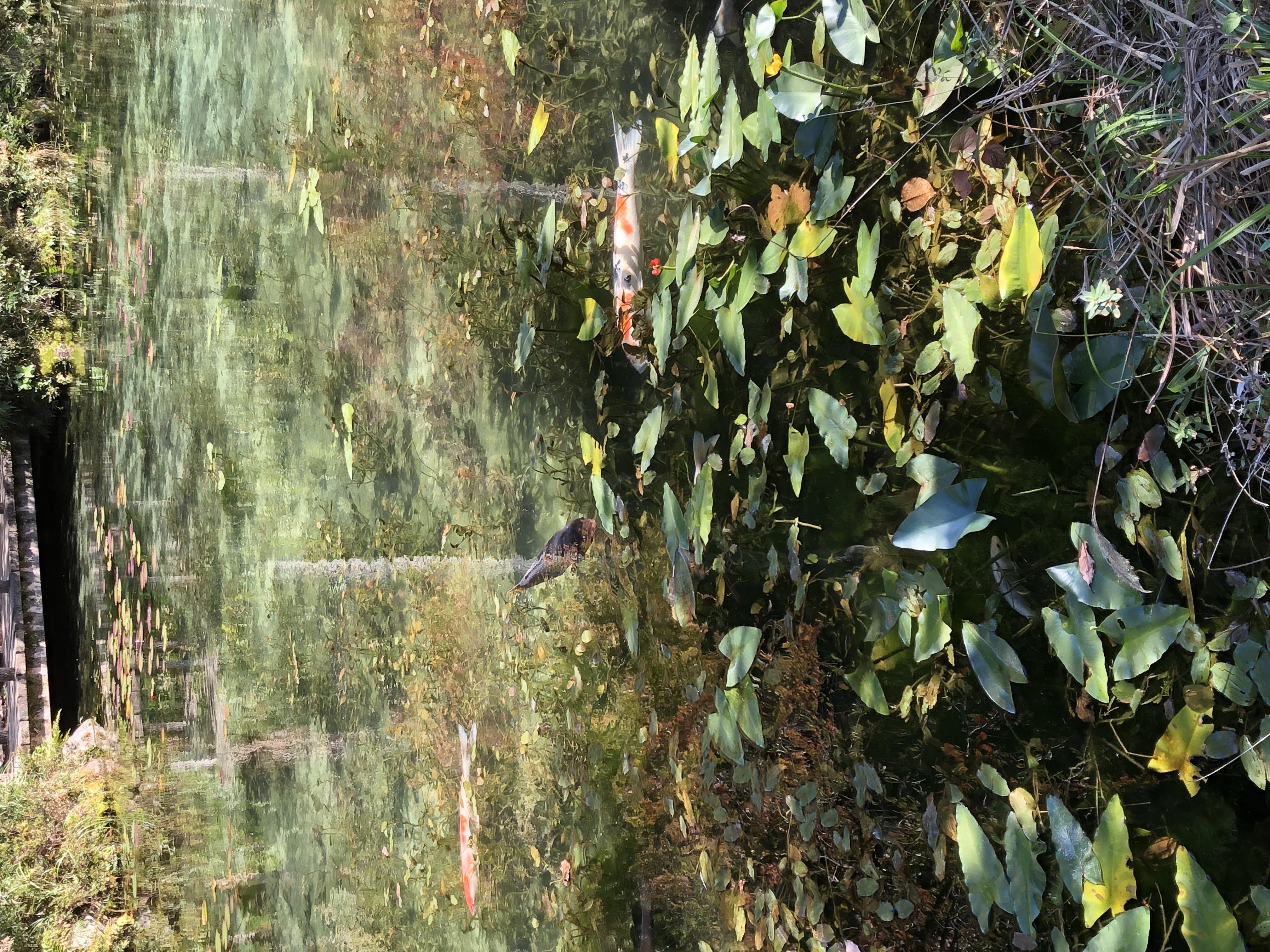 モネの池とバレンタイン(*´˘`*)♡